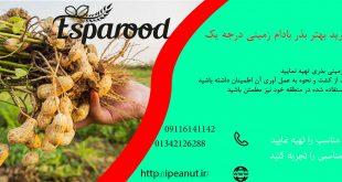 فروش بذر بادام زمینی در تهران