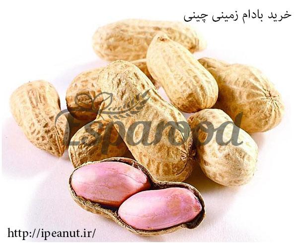 فروش بادام زمینی چینی