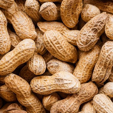 فروش عمده بادام زمینی باغلاف