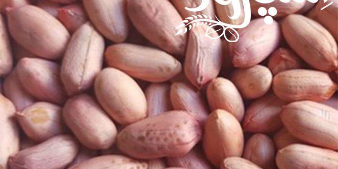 قیمت عمده بادام زمینی خام